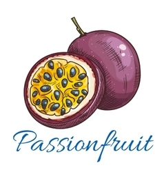 Passion fruit color sketch icon vector image