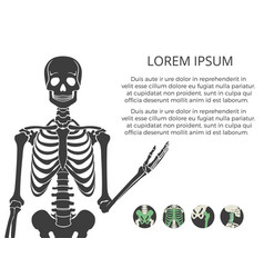 Medicinal poster or banner with human skeletone vector