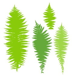 Fern set vector