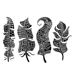 feathers collection vector image