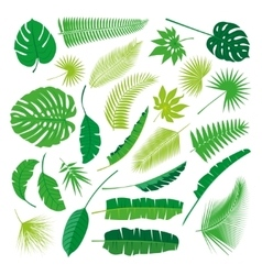 Tropical Leaves Collection isolate Big vector image