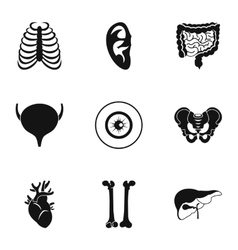 Structure of body icons set simple style vector image vector image