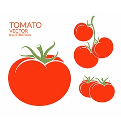 Tomato isolated vegetables on white vector
