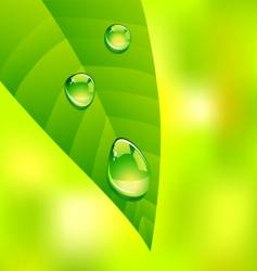 Leaf drops vector