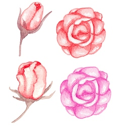 Watercolor red roses vector image