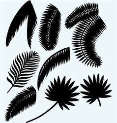Collection set of palm leaves vector