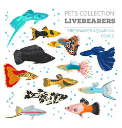 freshwater fishes breeds icon set flat style vector image