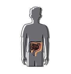 Human man body anatomy intestines medical image vector