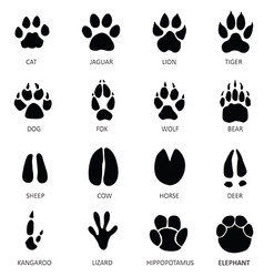 Animals footprints vector