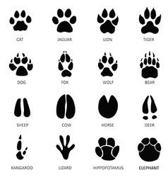 Animals footprints vector