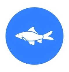 Red Tail Shark fish icon black Singe aquarium vector image