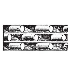 romanesque motive foundation vintage engraving vector image vector image