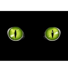 Cats eyes background vector image