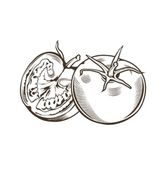 Tomatoes in vintage style line art vector