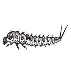 Fungus beetle larva vintage vector