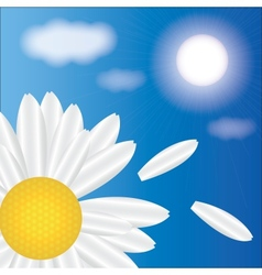 spring daisies on a background of sky vector image