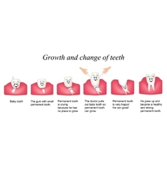 Growth and shift teeth in humans stages of vector