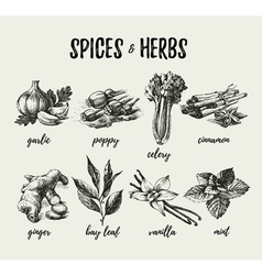 Kitchen herbs and spices hand drawn sketch vintage vector