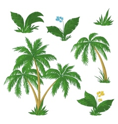 palm trees flowers and grass vector image