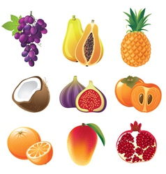 highly detailed fruits icons set vector image