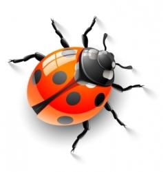 red ladybird vector image vector image