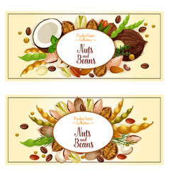 banners of nuts and fruit kernels vector image