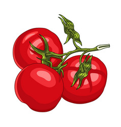Branch with three ripe tomatoes vector