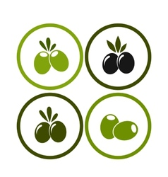 Set of colorful olives vector