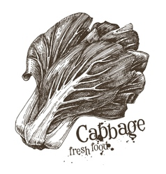 cabbage logo design template fresh vector image vector image