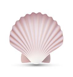 Scallop seashell ocean mollusk sea shell vector