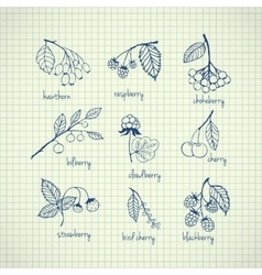 Set of garden and wild hand-drawn berries vector
