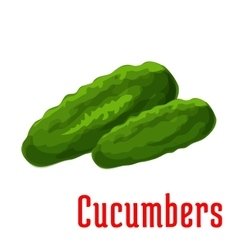 Cucumber vegetable icon vector
