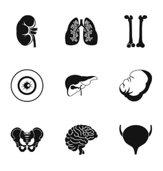 Internal organs icons set simple style vector