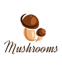 Fresh forest mushrooms vector