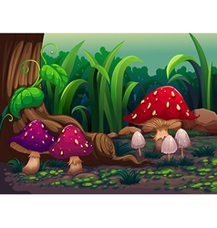 Giant mushrooms in the forest vector