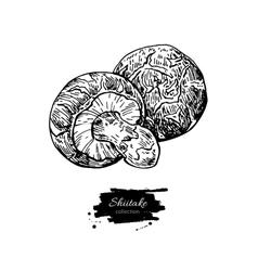 Shiitake mushroom hand drawn vector