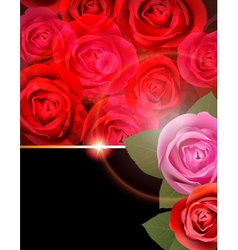 Rose flower background vector