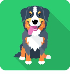 Dog bernese mountain dog sitting icon flat design vector