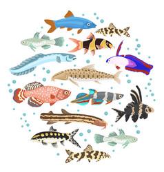 Freshwater aquarium fishes breeds icon set flat vector