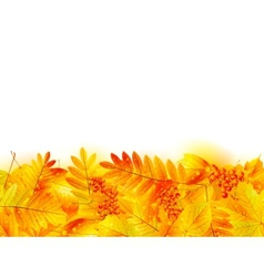 Autumn banner template with maple leaf vector image vector image