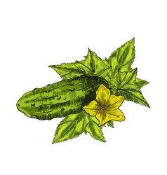 cucumber hand drawn isolated cucumber vector image vector image