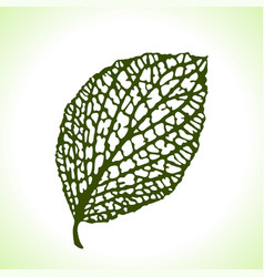 decorative leaf isolated natural detailed macro vector image vector image