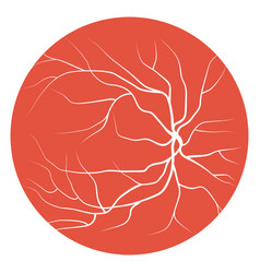 eye veins and vessels vector image