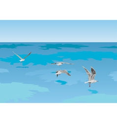 seagulls over sea vector image