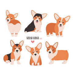 set of welsh corgi in different postures small vector image