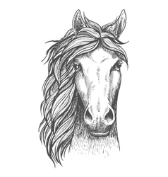 Sketched arabian purebred horse with alert ears vector image vector image