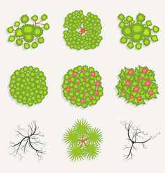 Trees in top view set of green and burnt trees vector
