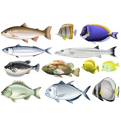 Different kind of ocean fish vector