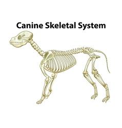 Skeletal system of a dog vector