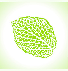 Decorative leaf isolated natural detailed macro vector